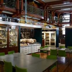 Grant Museum of Zoology and Comparative Anatomy London